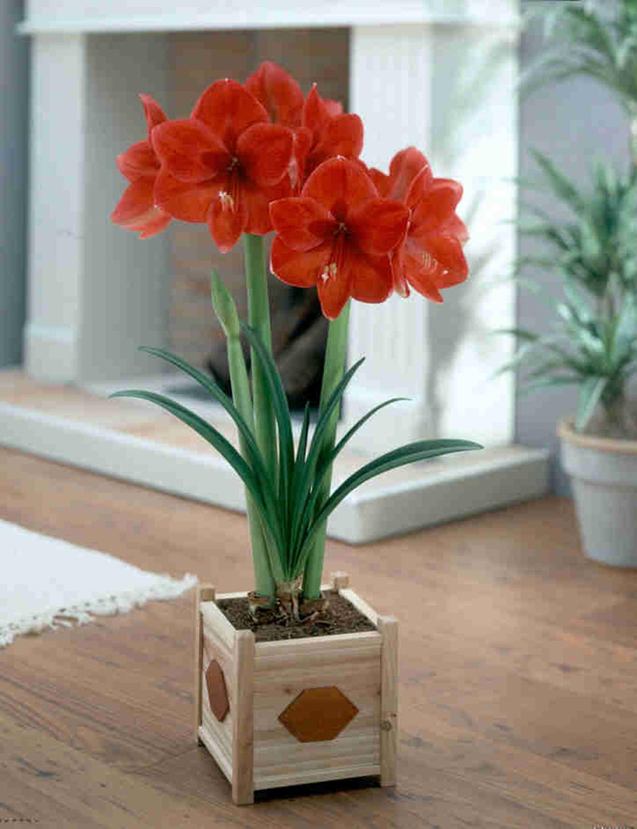 Домашние цветы в горшочках фото и название